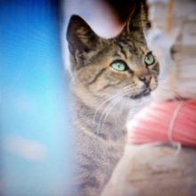 Viendo: Kedi (gatos de Estambul)